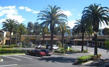 palm-trees-yorba-linda24